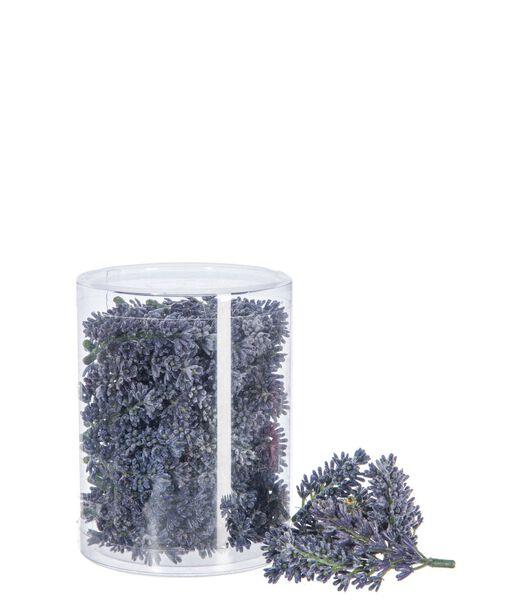 Doos 40 Lavendel Bloem  10X10x13cm